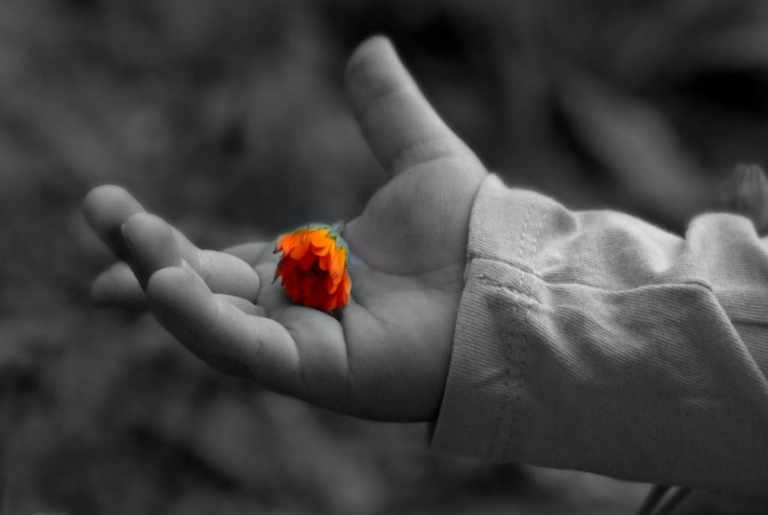 photo of a child's hand holding a flower